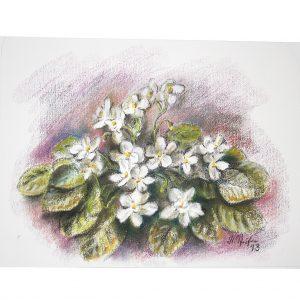 Blumenidylle Usambaraveilchen, Pastell von Hildegard Pfeifle